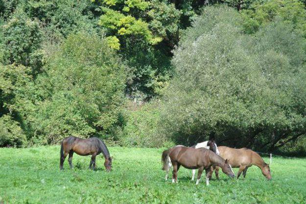 Weiden Pferdepension Hospach